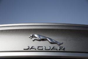 Jaguar Rover -294